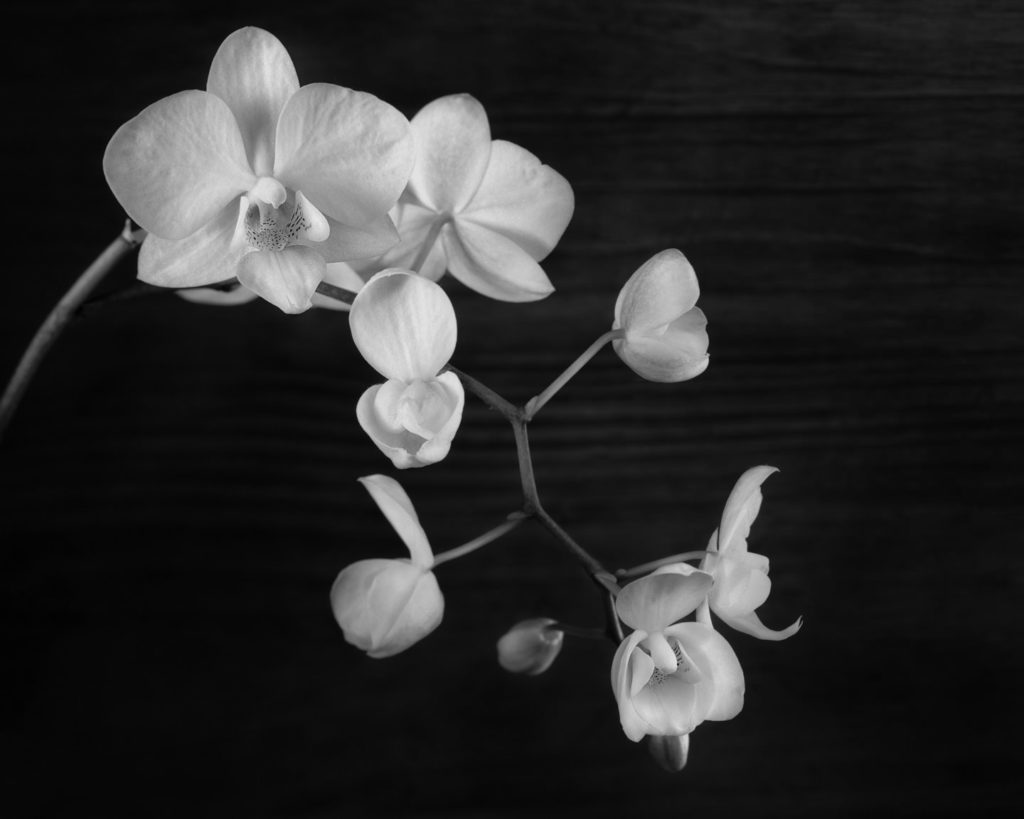Orchids and Buds