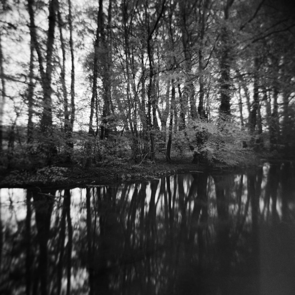 Cusworth Hall Lower Pond Study 5