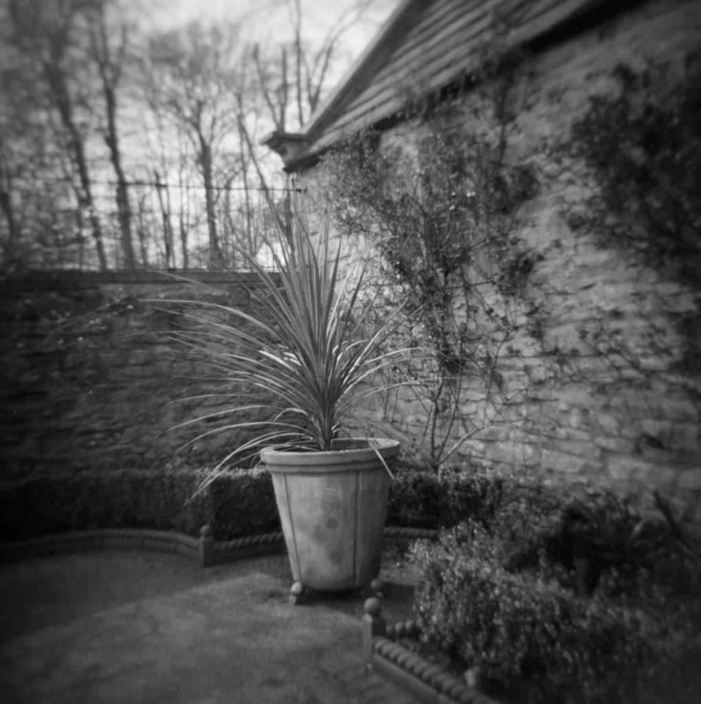 Lady Issabella's Garden Cusworth